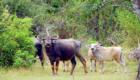 yala_nationalpark_slide7